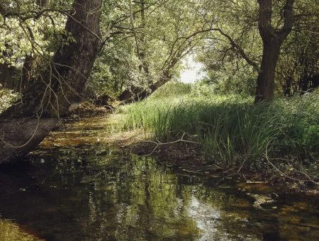 Toplata River