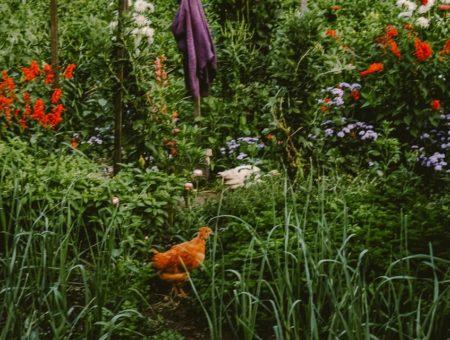The Gardens of Monk Stefan