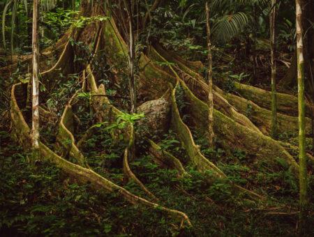 Copolia Trail – Morne Seychelles National Park Hike
