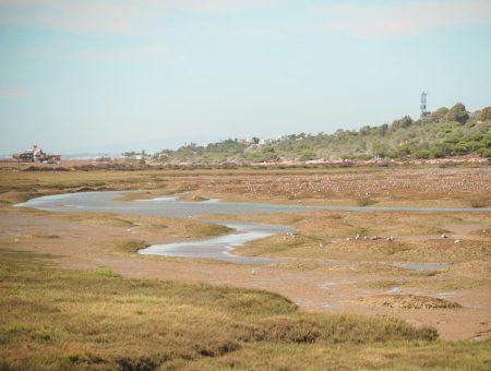 Quinta do Lago & Parque Natural da Ria Formosa