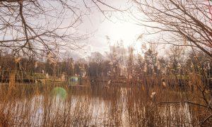 Forêt domaniale de Meudon – GR2 / GR22