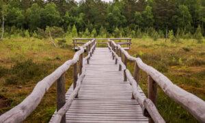 Nature Park Heidenreichstein Moor