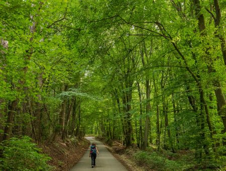Nature Park Eichenhain: Kierling – Haselbach