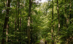 Nature Park Eichenhain: Weidling – Windischütte