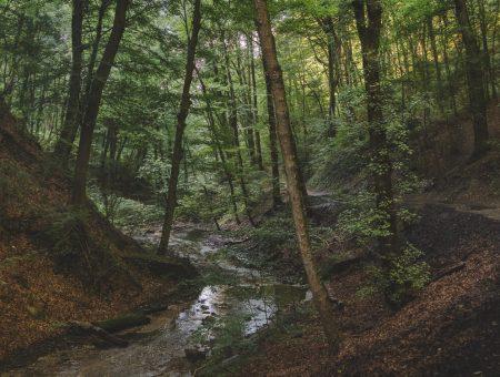 Nature Park Eichenhain: Hagenbachklamm