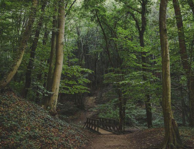 Nature Park Eichenhain