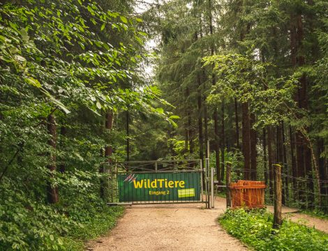 Naturpark Buchenberg: The Animal Park