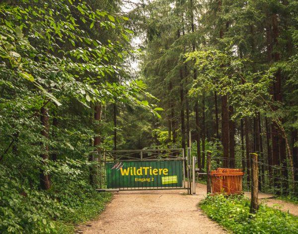 Naturpark Buchenberg: The Animal Park