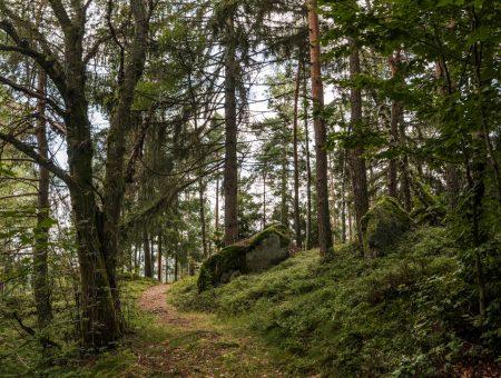 Nature Park Nordwald: Großpertholz