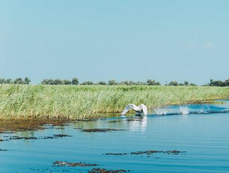The Danube Delta & Lake Razim
