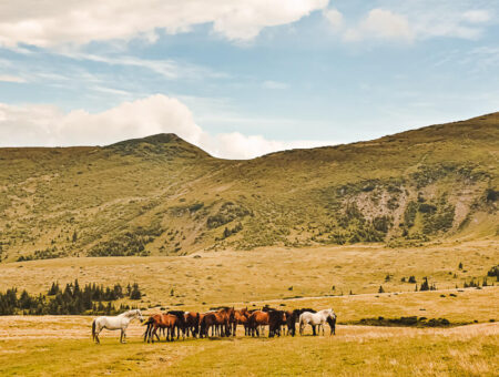 Horses Waterfall – Rodna Mountains National Park
